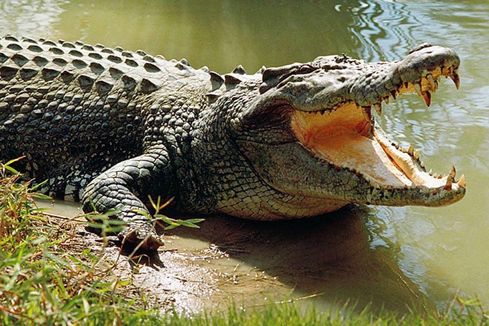 Боюсь крокодила! О детских страхах