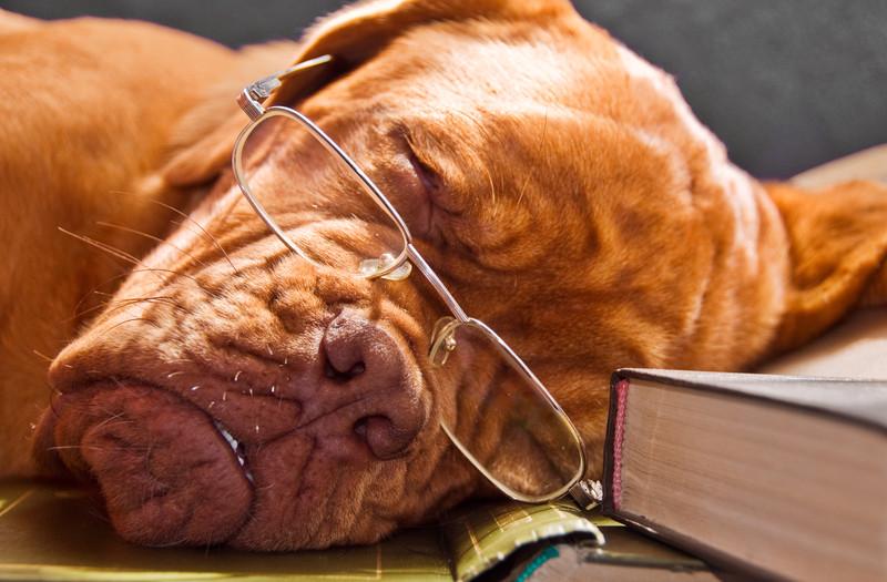 Ленивый, coach potato, человек-овощ, овощ, спящий пёс